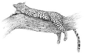 leopard wildlife art and illustration