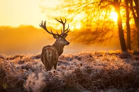 deer on meadow hd wallpaper 1946 wallpaper themes collectwall com