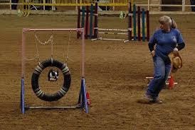 Backyard Agility Course Create A Dog Agility Obstacle Course At Home Care Com Community