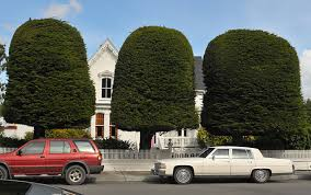 file ferndale ca berding house gum drop trees jpg wikimedia commons
