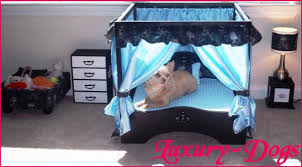 chambre pour chien de luxury dogs page 2 luxury dogs skyrock com