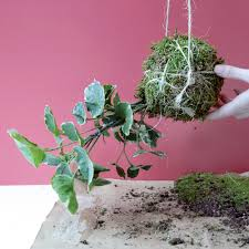 How To Make A Moss Wall by How To Make A Kokedama Hanging Garden