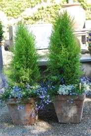 best 25 front porch flowers ideas on porch plants