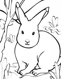 how to draw a arctic hare arctic hares coloring page free