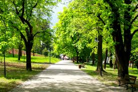 depression can be helped by a walk in the park mental healthy