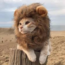 cat costume lion mane wig cat costume and small dog costume with complimentary