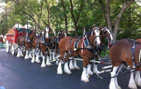 Budweiser Clydesdale Barn Budweiser Clydesdales Grants Farm St Louis Mo Travel
