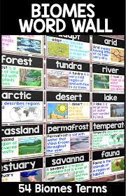 stem ecological organization formative assessments environment