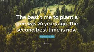 proverb quote the best time to plant a tree was 20 years