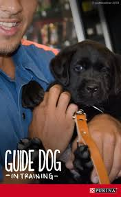 17 best meet purina images on pinterest the o u0027jays learning and pup