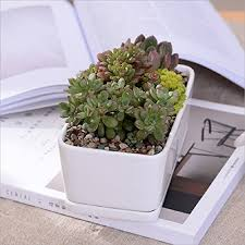 Ceramic Succulent Planter by White Ceramic Rectangular Flower Pot Modern Minimalist White Ceramic S