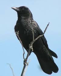 Audubon Backyard Bird Count by Audubon U0027s U0027great Backyard Bird Count U0027 This Weekend Mlive Com