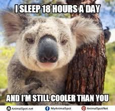 Koala Meme - wet koala memes different types of funny animal memes