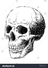 Halloween Skull Drawings Hand Drawing Skull By Pencil Use Stock Vector 215480623 Shutterstock