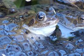 frogs in the pond gardening with children
