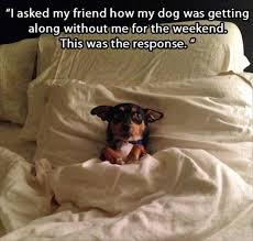 Dog In Bed Meme - 22 signs your dog s an introvert dog sleeping dog and animal