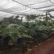 hilo home depot black friday the home depot 35 photos u0026 35 reviews nurseries u0026 gardening