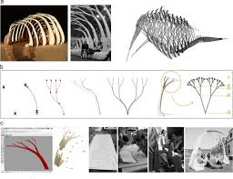 tree inspired dendriforms and fractal like branching structures in
