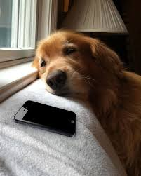 Dog Phone Meme - dog waiting by phone meme generator