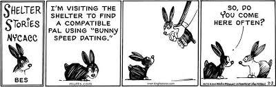 Speed Dating Meme - rabbit ramblings funny bunny monday meme day