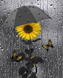 yellow gray wall sunflower butterflies bathroom bedroom home