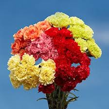 amazon com globalrose 100 color carnations fresh flowers for