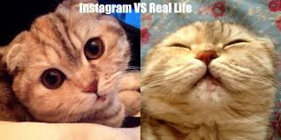 Cat Instagram Instagram Vs Real Life Cute Cats Hq Pictures Of Cute Cats And