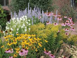 summer dreams is a pre planned garden that thrives on little water once elished black eyed susan cone flower goldenrod and more