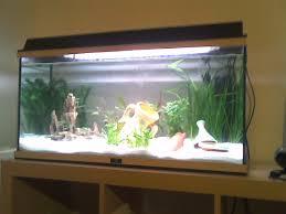 idee deco aquarium tentative d u0027aquariophilie a et n