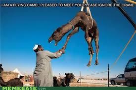 Camel Meme - camel meme by operez002 memedroid