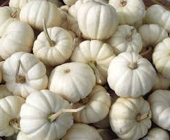 white pumpkins host a chic fall dinner party
