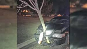 driver arrested with 15 foot tree in car grille 6abc