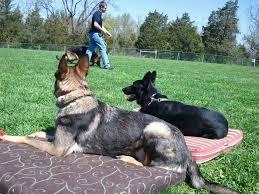 Canine Creature Comforts Creature Comfort Inn Trainingtraining Creature Comfort Inn