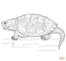 alligator snapping turtle coloring page free printable coloring