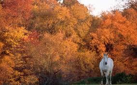 horse wallpaper desktop wallpaper for bedrooms