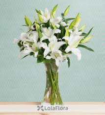 white lillies white lilies charming