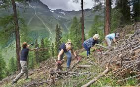 bureau d ude environnement suisse offres pour entreprises team events sous le signe de la nature