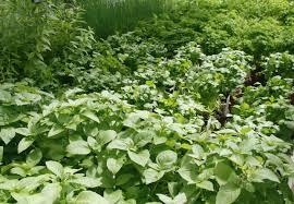 plantes cuisine fleurs et plantes en cuisine l étrange cécité jardins de