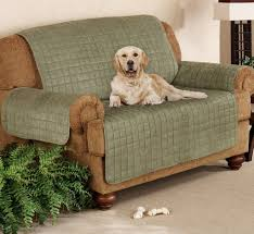 simple living room with quilted suede pet dog couch sofa cover