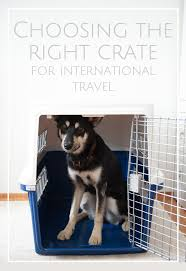 crate training crate training u0026 how to choose an airline approved crate for