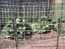 How To Make Trellis For Peas Lady Farmer U0027s Garden Weaving The Pea Trellis
