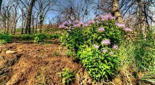 bird friendly native plants audubon managing invasive species audubon new york