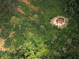 native plants of brazil photos emerge of an uncontacted amazon tribal community in brazil