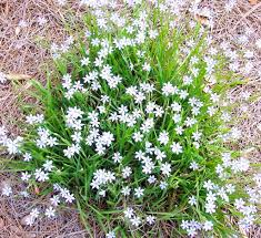 native plants in landscape management florida ecological solutions u0026 native plant landscapes