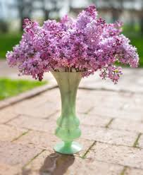 Lilac Flower by Keep Cut Lilacs Fresh Longer With These Tips My Chicago Botanic
