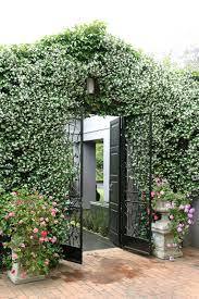 growing jasmine sa garden and home
