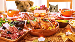 thanksgiving pet safety tips pet s animal hospital