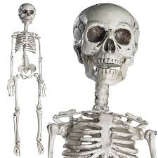 where can i buy cheap halloween decorations amazon com prextex 30 u201d halloween skeleton full body halloween
