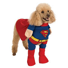 Cute Small Dog Halloween Costumes 88 Dog Disguise Images Animals Funny Animals