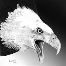 eagle pencil drawing how to sketch an eagle in pencil draw an